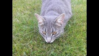В память, о кошке Басе (10.04.16 - 26.06.18)