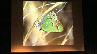 Bringing Nature Home With Doug Tallamy