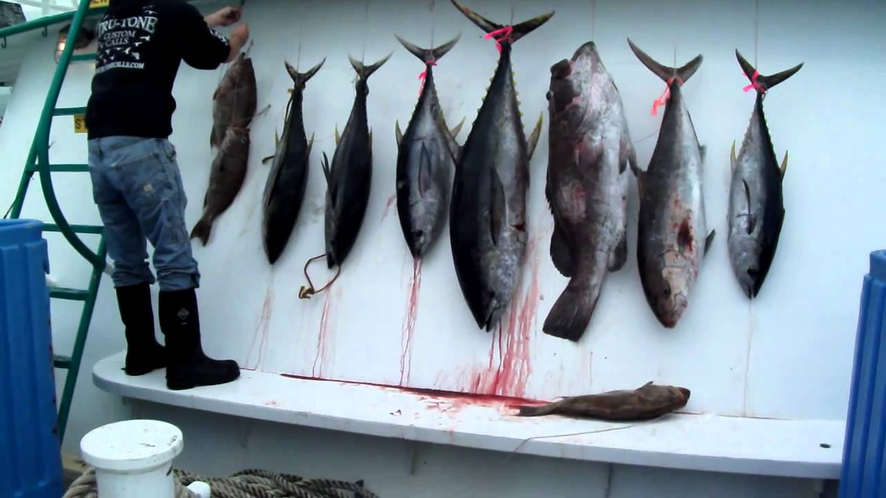 Galveston party boats inc tuna fishing 1 jan 29 30 2011 for Galveston fishing party boats