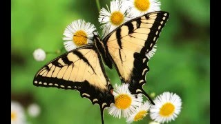 Amazing High Quality Butterfly Photos HD