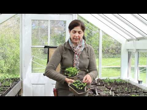 Spring Gardening Tips with Blithewold Mansion