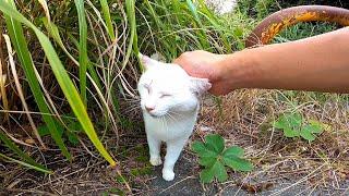 最初は逃げた白猫ちゃんだったが戻ってきて足元に擦り寄ってきた