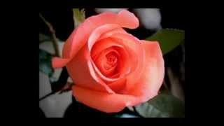Магазин цветов Алматы mir-cvetov.kz(, 2013-06-04T06:32:49.000Z)