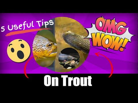 5 Useful Tips On Trout Fishing!