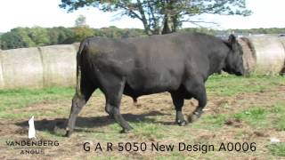 GAR 5050 New Design A0006 - Herd Sire for VanDenBerg Angus