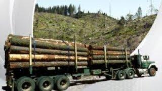 Schmutziges Holz – illegales Holz aus der Ukraine in deutschen Produkten