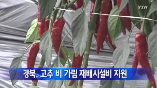 [경북] 고추 비가림 재배시설비 60억 원 지원 / Y…