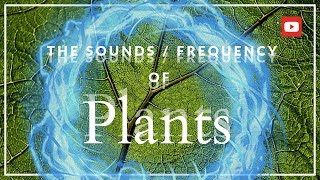 The Secret Frequency of Plants! ~432 Hz (MIND BLOWING!)