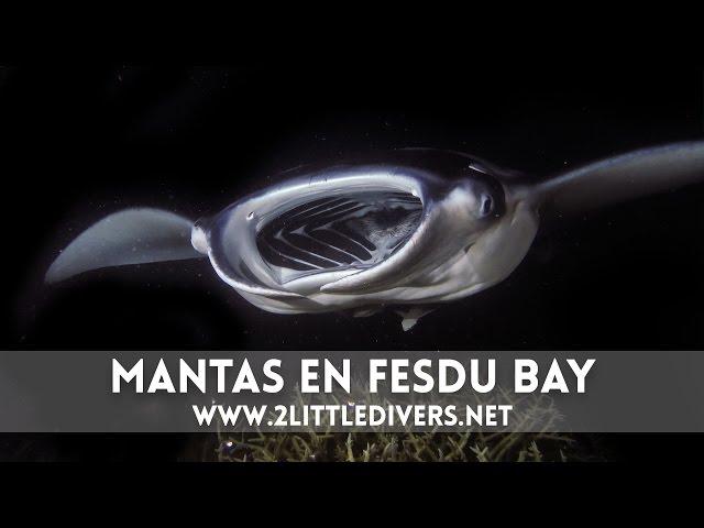 2 Little Divers | Fesdu Bay - Maldivas Semana Santa 2015