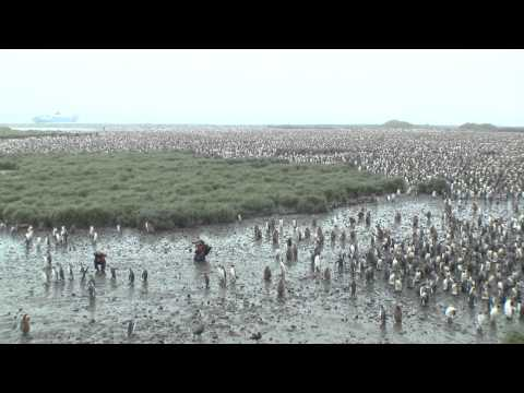 Elysium Epic - Shackleton Antarctic Visual Epic:part 4 - in the company of Happy feet