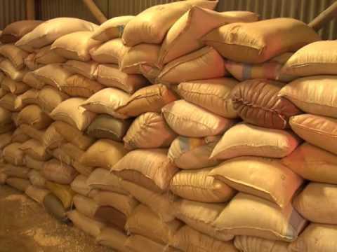 Post harvest losses  Malawi FAO ENG