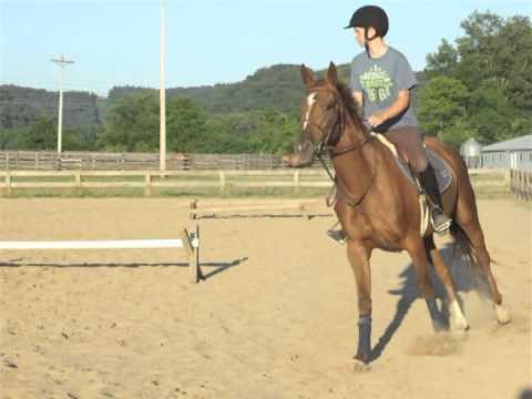 Paris: the horse I'm leasing
