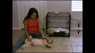 Puppy Training-Puppy Screaming and Whining in the Crate