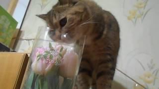 Кошка Ромашка нюхает букет)))