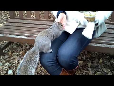 Feeding Squirrels Samsung Galaxy BEAM HD sample video