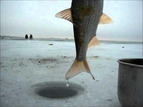 цимлянское водохранилище ловля плотвы зимой