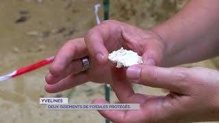Yvelines : Deux gisements de fossiles protégés
