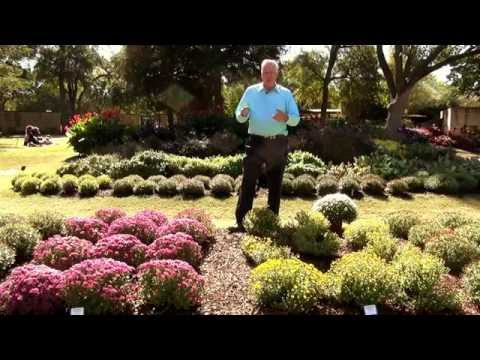 The Secrets of Mums: In The Garden with Dave