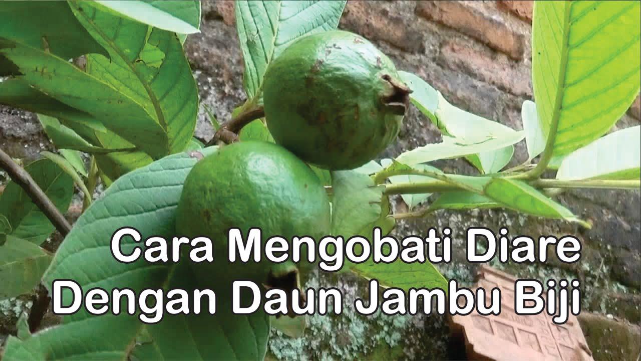 """""""Obat Herbal Diare / Mencret"""", Cara Alami Mengobati Diare ..."""