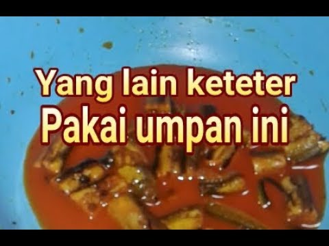 Umpan Jitu Ikan Lele Babon Kolam Galatama Susah Makan Kilo Gebrus Harian Air Hijau Bening Youtube