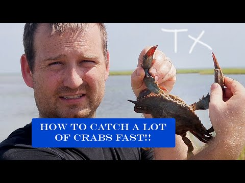 How to Catch and Clean Blue Crabs- Galveston Texas