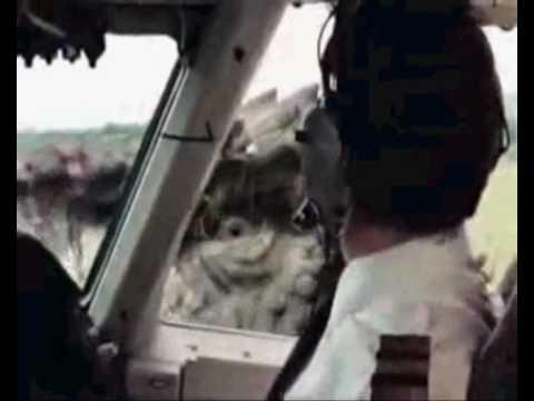 Фильм Парк Юрского периода 3 (2001) Смотреть Онлайн