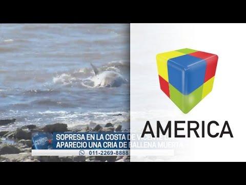 Encuentran una ballena picuda muerta en Vicente López