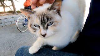 防波堤を走ってくる野良猫が可愛過ぎる