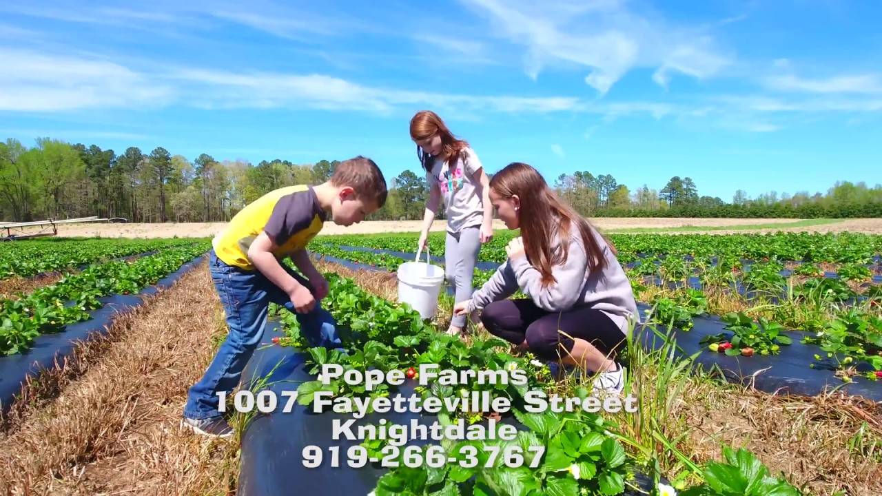 Going Places Pope Strawberry Farm Youtube