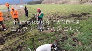 エルフュージャパン犬舎 公文さんのヘッドカメラの動画です。 エルフュ...