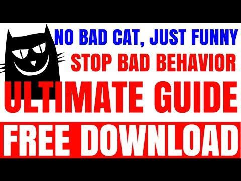 Super Funny Cats Videos Compilation 545 | Funny Cat Jump Fail 2015