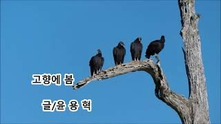 고향에 봄ㅡ윤 용 혁