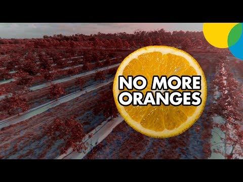 No More Oranges