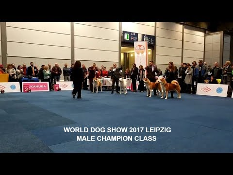 WORLD DOG SHOW 2017 | MALE CHAMPION #AKITA #WDS | GERMANY, LEIPZIG | #WDS2017