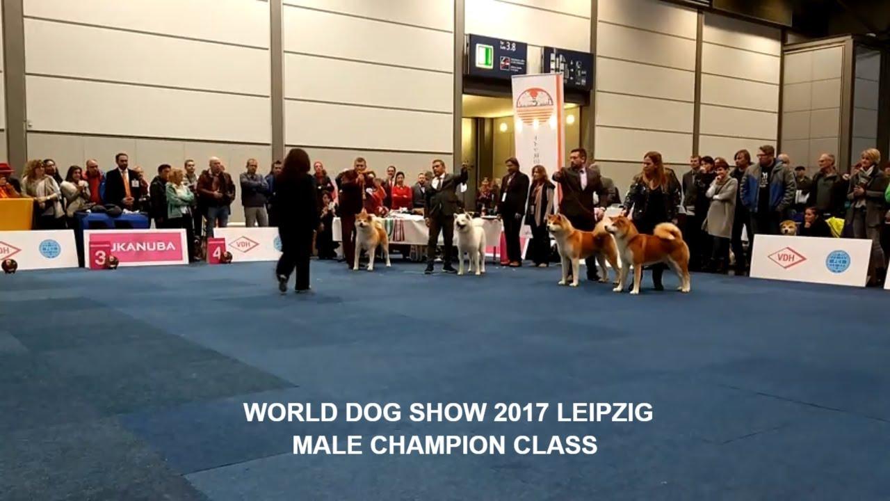 World Dog Show (World Dog Championship) in 2018 86