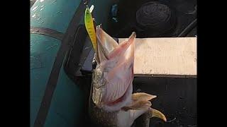 ЩУКИ любят ЭТОТ воблер Рыбалка на щуку в сентябре 2021 Ловля щуки на воблеры