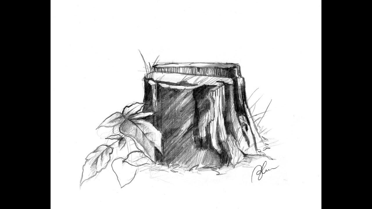 Пень рисунок карандашом