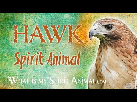 hawk-spirit-animal-|-hawk-totem-&-power-animal-|-hawk-symbolism-&-meanings