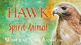Hawk Spirit Animal | Hawk Totem & Power Animal | Hawk Symbolism & Meanings