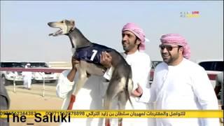 نهائي بطولة سلطان بن زايد  -سويحان- شوط الذيخه