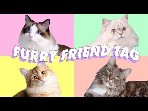 ♡ MEET ALL MY CATS! RAGDOLL, MAINE COON, BRITISH LONG HAIR, & SIBERIAN ♡