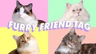 ♡ MEET ALL MY CATS! RAGDOLL, MAINE COON, BRITISH LONG HAIR, & SIBERIAN ♡ thumbnail