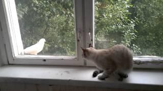 Ржака кошка врезается в окно с грохотом /  Cat smashes the window with a bang