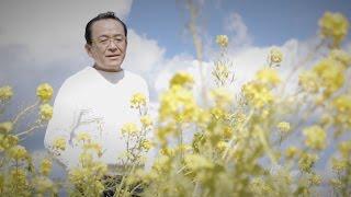湯原昌幸 - 菜の花