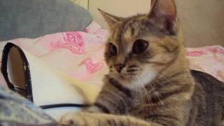Кошке Ромашке понравилась футболка!