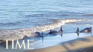 five-whales-died-after-a-mass-stranding-on-a-beach-in-hawaii-time