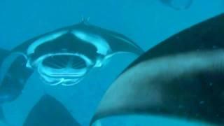 モルディブ バア環礁リーティビーチリゾートに宿泊し、マンタポイントへ...