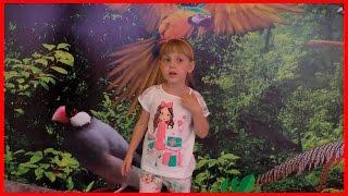 Выставка птичий рай. Оренбург. АРМАДА