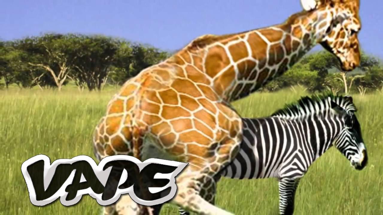 Top 5 Strange Animal Mating Rituals YouTube