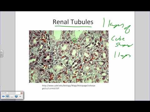 Intro to Histology and Epithelial Tissues.wmv